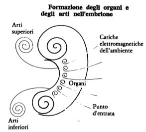 Mikio Kushi - embriologia energetica