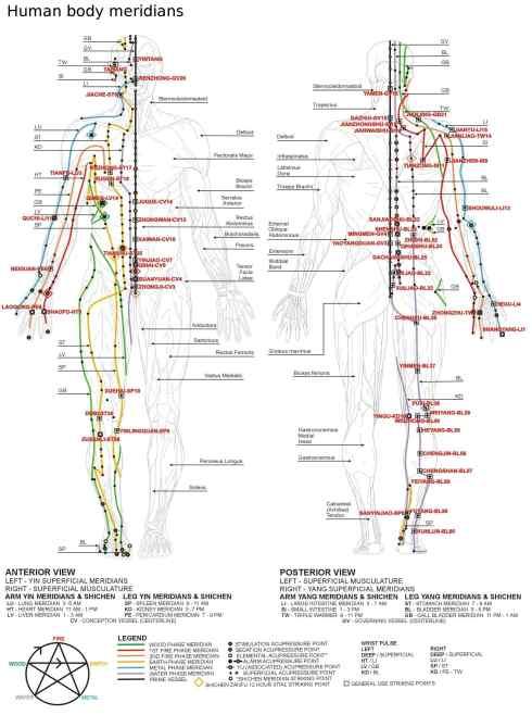 Mappa dei 12 Meridiani Principali secondo la Medicina Tradizionale Cinese